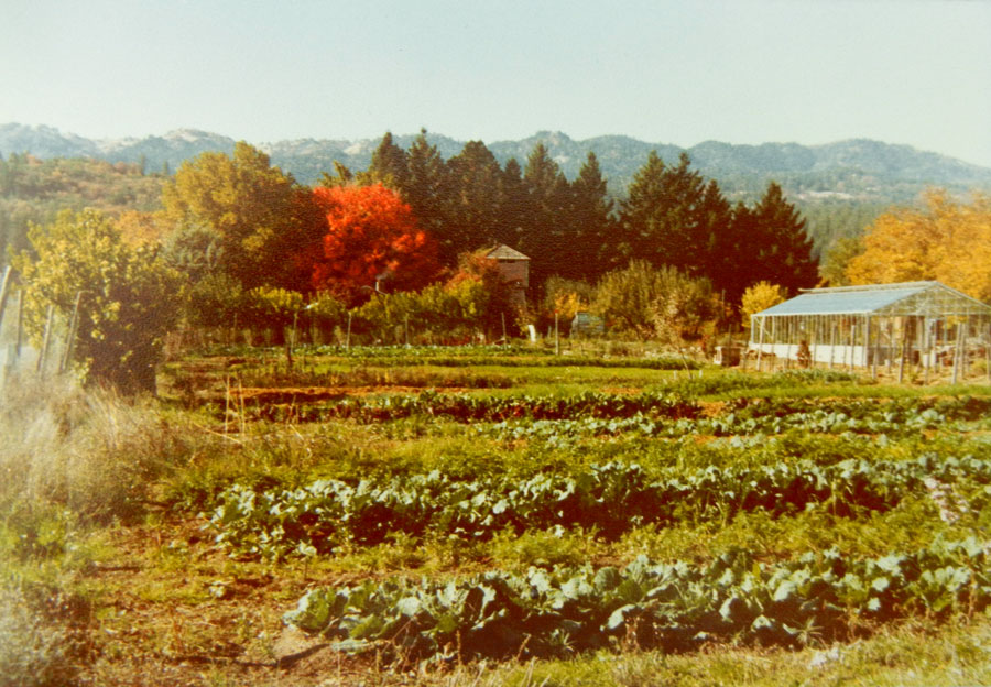 A view of Alan Chadwick's Garden in Covelo, California 1974-1978