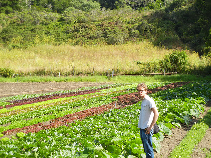 Vegetables growing in the farm fields at Green Gulch