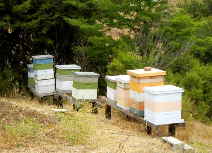 Bee hives located at the UCSC Agroecology Program farm in Santa Cruz