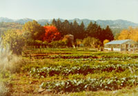 Alan Chadwick garden at Covelo, California